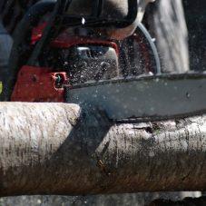 Фото лесоруба с бензопилой
